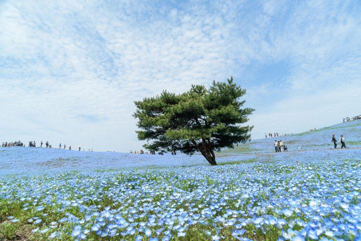 9D7N Ibaraki + Niigata + Gunma